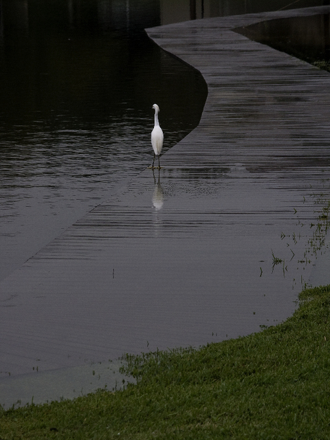 Dion Mcinnis  'Egret On Walk', created in 2004, Original Photography Color.