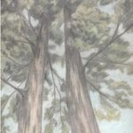 Trees By Dorothy Nuckolls
