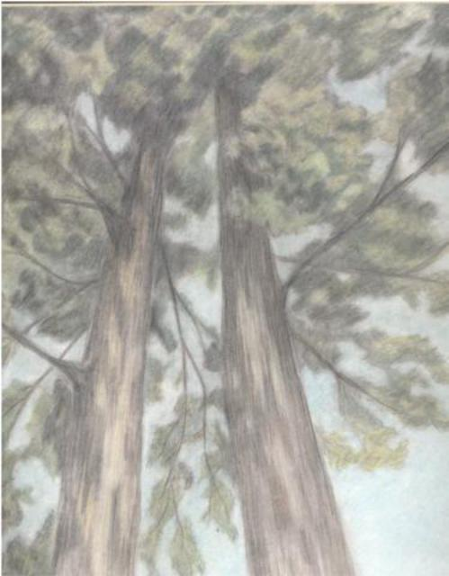 Dorothy Nuckolls  'Trees', created in 2003, Original Drawing Pencil.