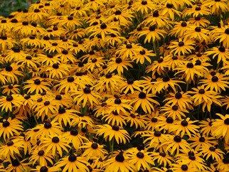 David Bechtol Artwork Field of yellow and black, 2007 Field of yellow and black, Floral