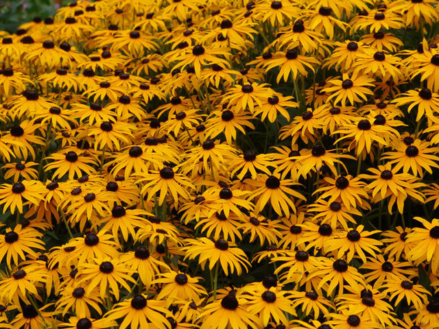 David Bechtol  'Field Of Yellow And Black', created in 2007, Original Photography Other.