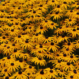 Field Of Yellow And Black, David Bechtol