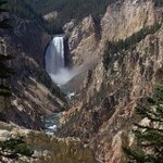 Lower Falls Yellowstone River By David Bechtol