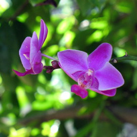 Don Jones: 'Orchid 2', 2012 Color Photograph, Floral. Artist Description:             country scenery, caribbean, donjones, animal, bird, wwilflife, donkey,     Orchid, plant, flowers, don jones, photography      ...