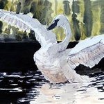 swan By Donna Gallant