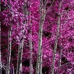 PINK FOREST By Dora Martinez