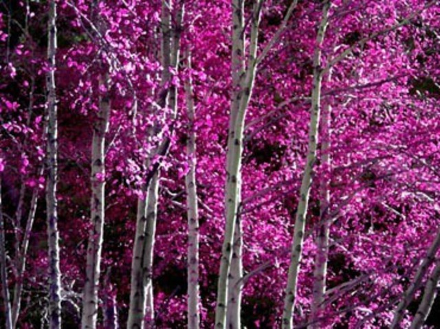 Dora Martinez  'PINK FOREST', created in 2008, Original Computer Art.