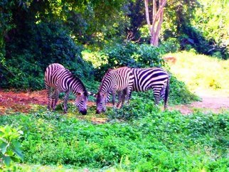 Artist: Oleti Joseph Andima - Title: AFRICAN ZEBRAS - Medium: Color Photograph - Year: 2012