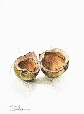 Lou Posner: 'Coconut Shell Puerto Rico', 2010 Pencil Drawing, Botanical.  I found this coconut shell on the beach in Puerto Rico and took it back to the lodgings to make some art of it.  Colored pencil on paper...
