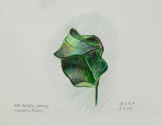 Pencil Drawing by Lou Posner titled: Dry Leaf, 2009