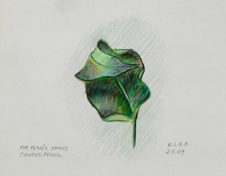 Pencil Drawing by Lou Posner titled: Dry Leaf, created in 2009