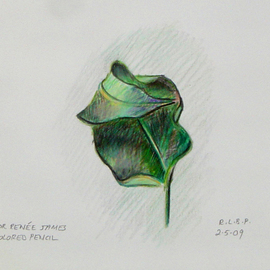 Lou Posner Artwork Dry Leaf, 2009 Pencil Drawing, Nature