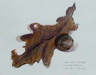 Pencil Drawing by Lou Posner titled: White Oak Leaf and Pignut Hickory Nut, created in 2009