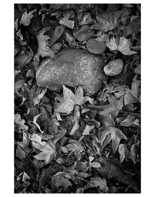 Eddie Ostrowski Artwork Rock and Leafs, 2014 Black and White Photograph, Still Life