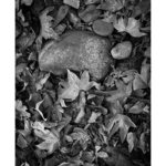 Rock And Leafs, Eddie Ostrowski
