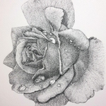 rose flower By Nazanin Majdi