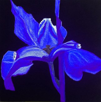 Elizabeth Bogard Artwork Tres Flores, Iris, 2015 Tres Flores, Iris, Floral