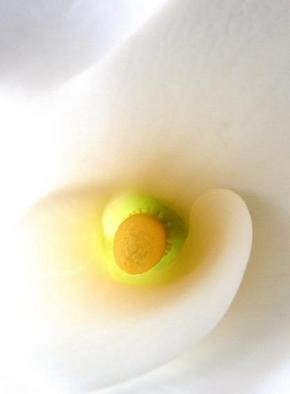 Artist: Elio Morandi - Title: calla lily - Medium: Color Photograph - Year: 2004