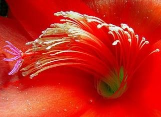 Artist: Elio Morandi - Title: red flower - Medium: Color Photograph - Year: 2004