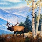 Elk In The Rockies, Ellen E Hinson