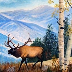 , Elk In The Rockies, Wildlife, $499