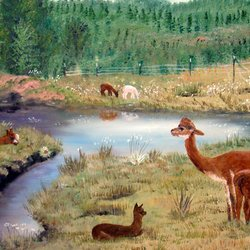 , Alpaca Meadow, Animals, Sold