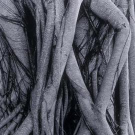Banyan Trees legs entwined