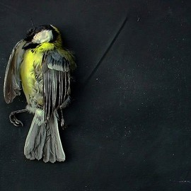 Emilio Merlina: 'forgive me 09', 2009 Color Photograph, Inspirational. Artist Description:  digital photo ...