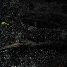 Emilio Merlina: 'in the black garden', 2009 Color Photograph, Inspirational. Artist Description:  digital photo ...