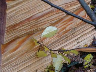 Engelina Zandstra Artwork Autumn 64, 2010 Color Photograph, Nature