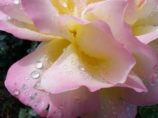 Engelina Zandstra Artwork Flowers 2, 2010 Color Photograph, Floral