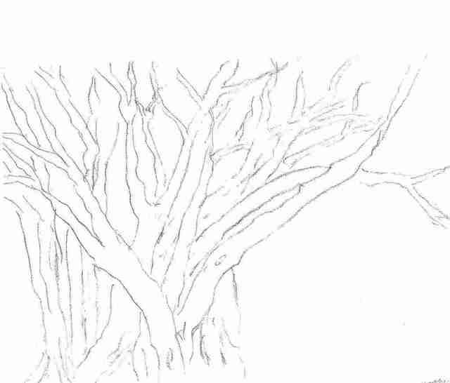Maria Teresa Fernandes  'Branches By Ebf', created in 2006, Original Drawing Pencil.