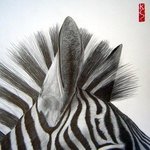 Zebra close up By Eric Stavros