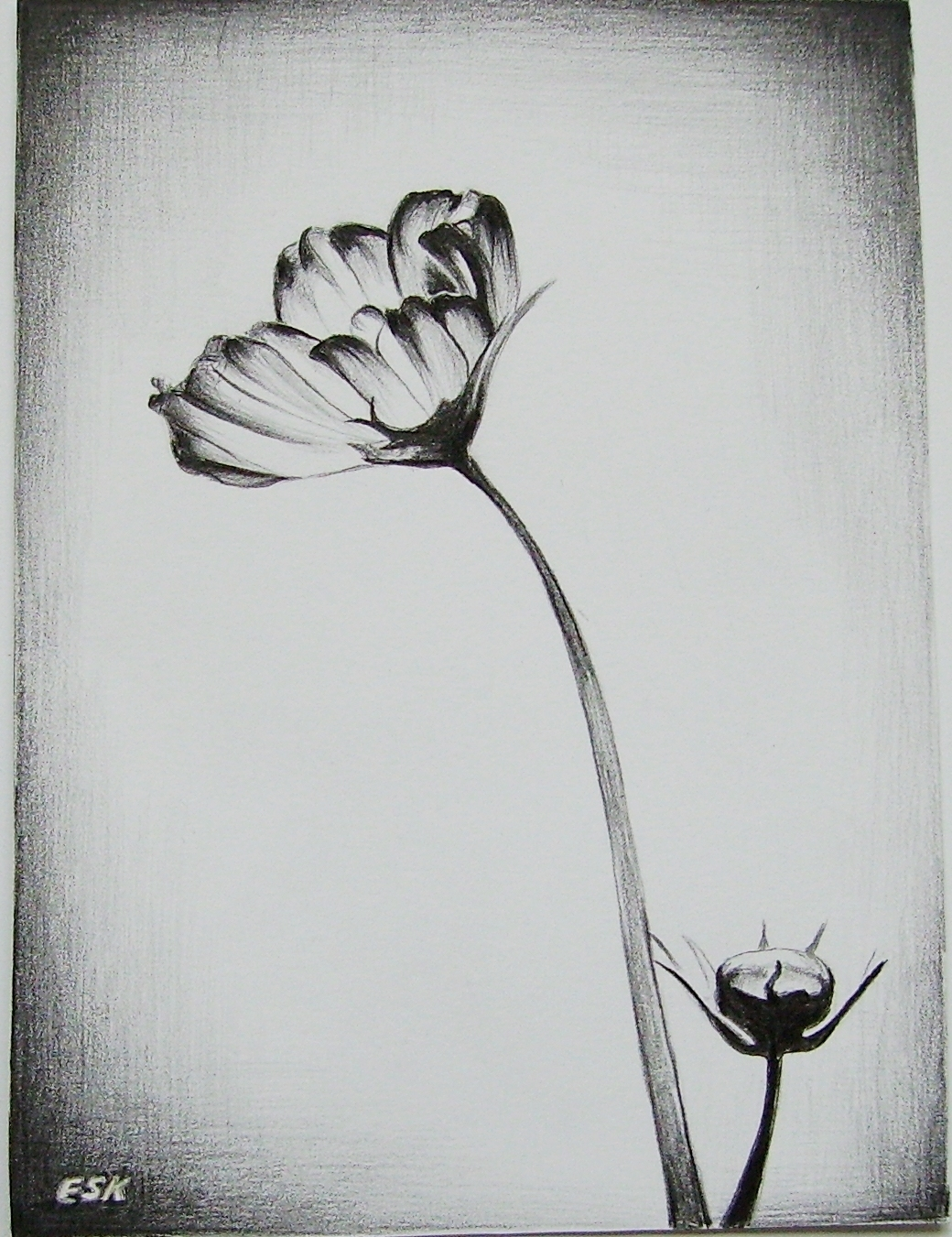 Simple Flower Vase Drawing