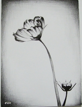 - artwork flower-1345999523.jpg - 2012, Drawing Pencil, undecided