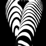 zebra ass By Mikhail Faletkin