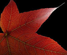- artwork Fall_Colours-1326413016.jpg - 2010, Photography Color, Still Life