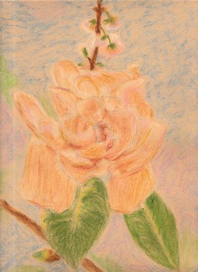 Luana Pau: 'peony', 2018 Oil Pastel, Floral. Artist Description: rose, peony, oil pastels, botanical, flower, illustration, isolated, background, green, leaf, vintage, drawing, garden, blossom, flora, bloom, beautiful, nature, bouquet...