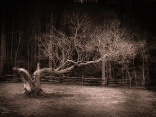 Falcon None: 'Tree in Winter', 2015 Digital Photograph, Nature. Artist Description:   Roaring Gap, Stone Mountain, nature, stream, tree, winter ...