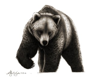 Alejandro Jake: 'The Bear', 2016 Digital Print, Animals.  The Bear- Contributed by Haroldthebigman in the bears club ...