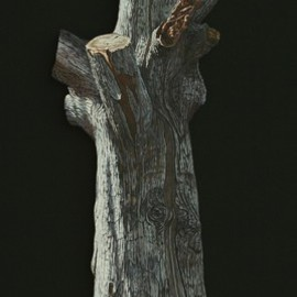 Stephen Fessler: 'Arboreal Memorial', 2010 Oil Painting, Americana. Artist Description:       This painting on canvas is not rectangular, but has been cut to the shape of this old oak tree trunk. The dimensions are those of an imaginary rectangle which would enclose the entire image, and the stretcher is constructed so that the image seems to float two inches ...