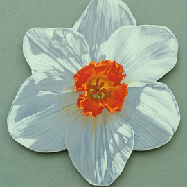 Stephen Fessler Artwork Daffodil, 2013 Oil Painting, Floral