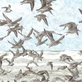 Floris De Mol: 'A Flock of Seagulls', 2012 Other Photography, Landscape. Artist Description:  Photo with water colours finish.Mentioned price refers to print. Other sizes and printing materials are possible.Limited edition of 5 prints.  ...