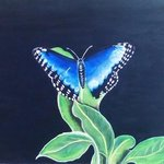 THE BLUE BUTTERFLY  By Geary Jones