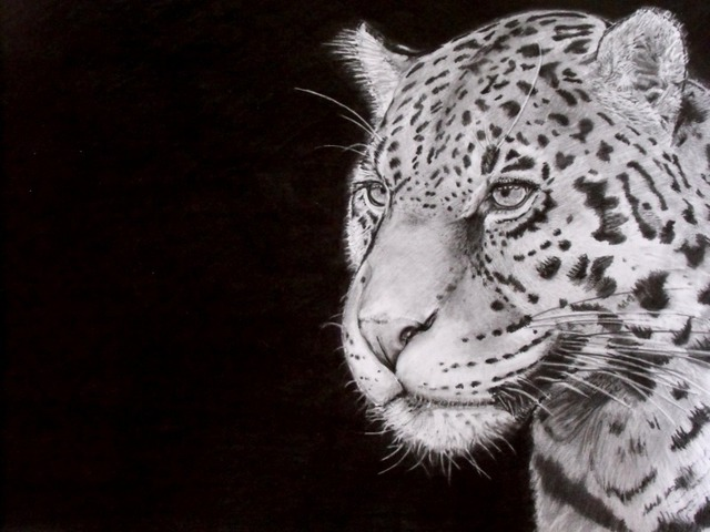 Andrew Dyson  'Jaguar', created in 2010, Original Drawing Pencil.