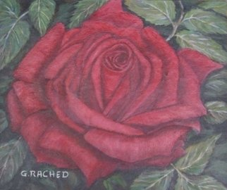 Ghassan Rached: 'Single Rose', 2002 Oil Painting, Floral.  Oil painting by Ghassan Rached ...