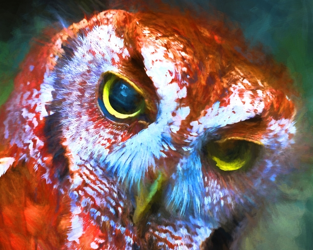 Artist Db Jr. 'Red Owl- Winner Of Artpop' Artwork Image, Created in 2017, Original Digital Painting. #art #artist