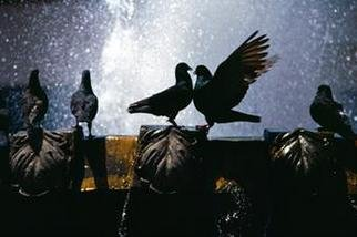 Animals Color Photograph by Gregory Stringfield titled: Love Birds, created in 2001