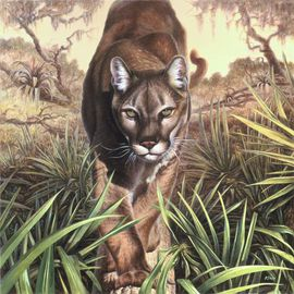 Hans Droog Artwork Florida Panther, 2015 Oil Painting, Wildlife