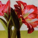 Amaryllis By H. N. Chrysanthemum